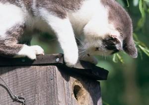 katz-vogelschutz